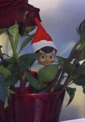 Elf of  Shelf
